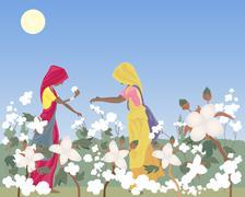 Cotton picking Stock Illustration