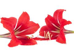 flower composition. beautiful red flower - stock photo