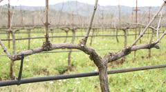 Greek Vineyard Stock Footage