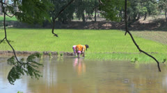 India Tamil Nadu rice paddy green panel and workers 9 Stock Footage