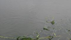 fish eating leaf - stock footage