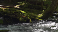 Water flows through roots on tree in creek Stock Footage