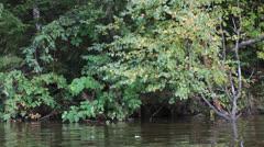 Overgrown riverside. Stock Footage