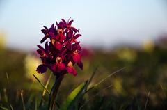 orchid portrait - stock photo