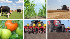 Agriculture, Food Production Collage Stock Footage