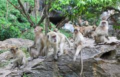 Family of monkeys Stock Photos