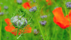 Fleurs-Champ-Jardin-Parc Stock Footage