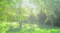 Green Park. Beautiful Sunny Day Outdoor Stock Footage