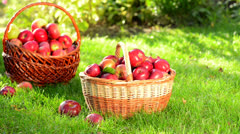 Organic Apples in a Basket outdoor Stock Footage