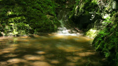 River runs over waterfalls in the primeval forest Stock Footage