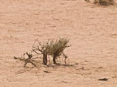 Wadi Rum desert Stock Photos