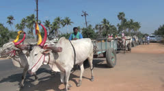 India Tamil Nadu Puducherry oxen with colored horns pull carts 2 Stock Footage