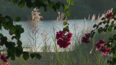 India Tamil Nadu Thanjavur red flowers in light reflected from river 3 Stock Footage