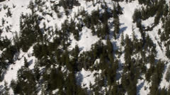 Trees On Snowy Mountainside - stock footage