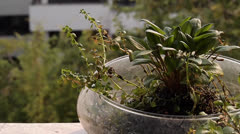 Plant in pot Stock Footage