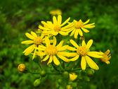 Stock Photo of Yellow Flower