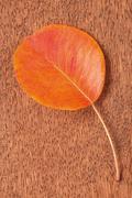 Single autumnal leaf Stock Photos