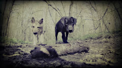 Two dogs playing with a stick. Stock Footage