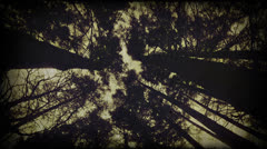 Stock Video Footage of Scary mood trees crones. Styled as archival footage.