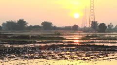 White egret in field. Stock Footage