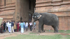 India Tamil Nadu Thanjavur temple woman runs from elephant blessing 9 Stock Footage