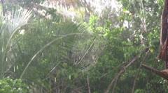 Spiderweb ,monsoon rain - stock footage