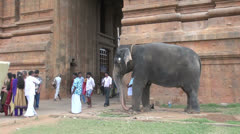 India Tamil Nadu Thanjavur temple elephant touches heads in blessing 5 Stock Footage