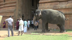 India Tamil Nadu Thanjavur temple playful elephant trunk touch 4 Stock Footage