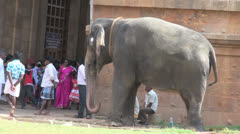 India Tamil Nadu Thanjavur temple elephant blesses boy 2 Stock Footage