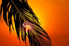 Sunset behind coconut leaf Stock Photos
