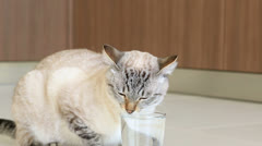 Thai cat is drinking clean water. Stock Footage