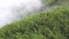 Bamboo forest with cloud in asia Stock Footage