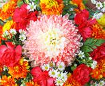 Colorful chrysanthemum Stock Photos