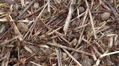 Many ants Stock Footage