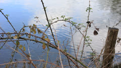 Pond and brambles 01 Stock Footage