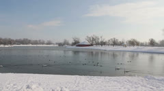 Lot of birds at Jarun lake in Zagreb Stock Footage