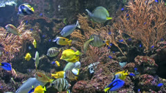 Group of coral fish in  water. Stock Footage
