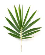 bamboo leaves - stock photo