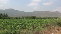 India Tamil Nadu papaya crop and Western Ghats Stock Footage