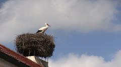 Stork - Nest - Austria Stock Footage