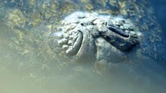 Macro alligator snout Stock Footage
