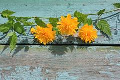 pretty wooden background with yellow flowers - stock photo