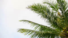 Coconut palms against the sky Stock Footage