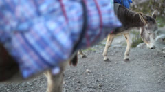 Donkeys carry loads Stock Footage