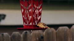 Small bird eating from bird feeder Stock Footage