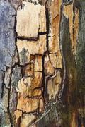 decayed wood - stock photo