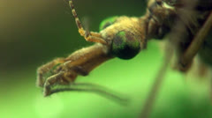 Crane fly macro Stock Footage