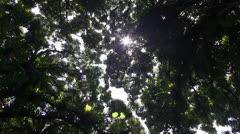 Rain forest , jungle sun flicker Stock Footage