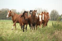 Batch of young ponnies on autumn pasturage Stock Photos