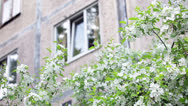 White plastic double door window and blossom of apple tree Stock Footage